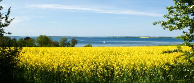 Schöne Ostseelandschaften